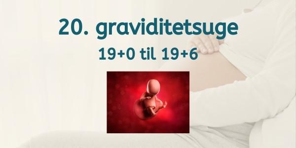 20. graviditetsuge - gravid uge 19