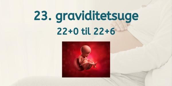 23. graviditetsuge - gravid uge 22