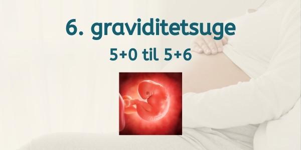 6. graviditetsuge - gravid uge 5