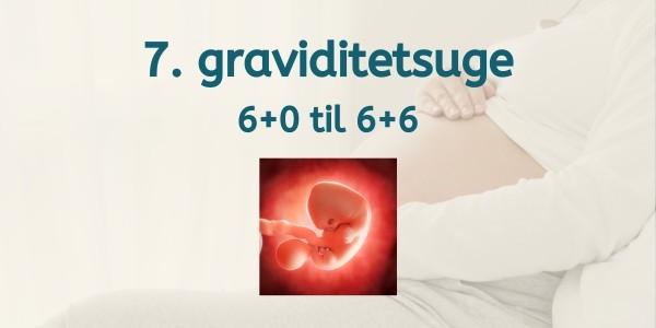 7. graviditetsuge - gravid uge 6
