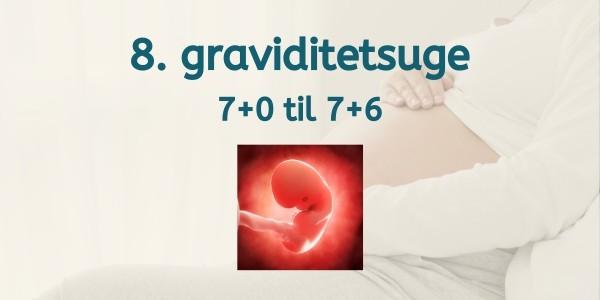 8. graviditetsuge - gravid uge 7